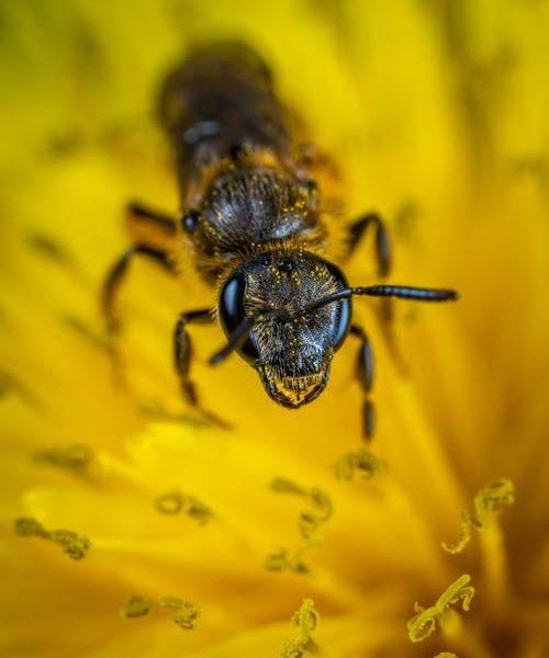 تفسير رؤية جحور النمل في الحلم
