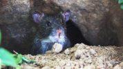 تفسير رؤية جحر الفأر في الحلم