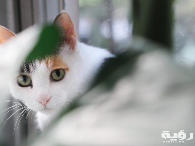 تفسير رؤية القطط في الحلم موقع رؤية