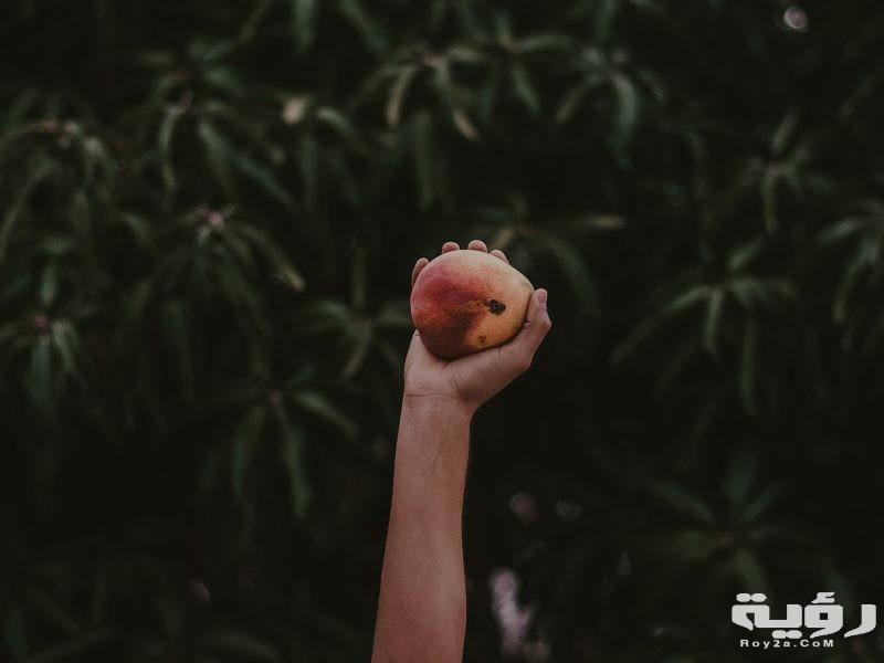 تفسير رؤية شجرة المانجو في الحلم
