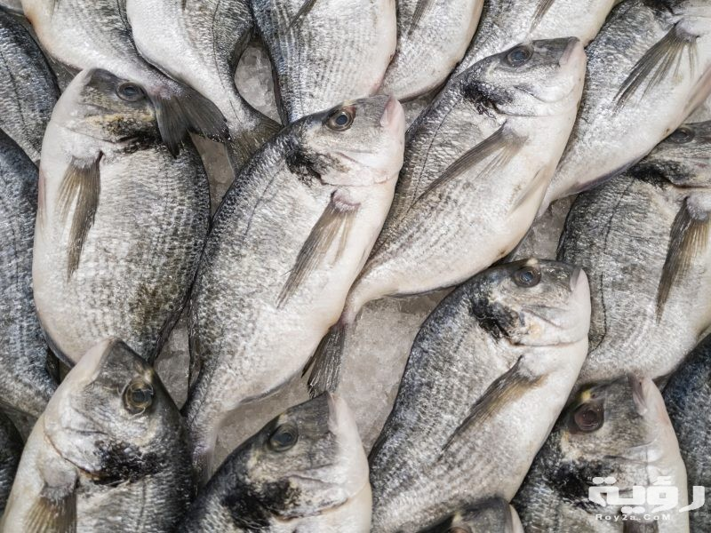تفسير رؤية السمك النيء في الحلم