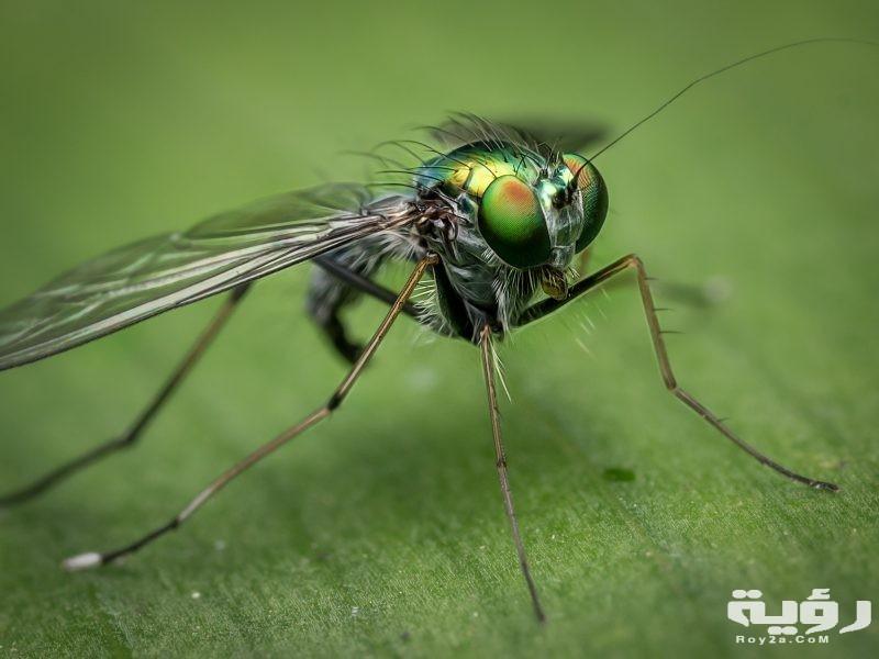 تفسير رؤية الحشرات الطائرة في الحلم