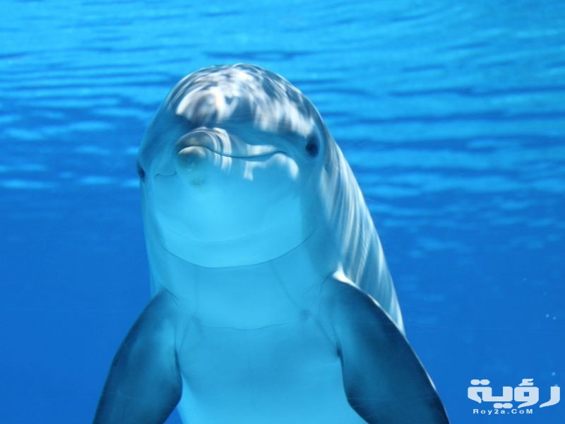 تفسير رؤية سمك الدلفين في الحلم