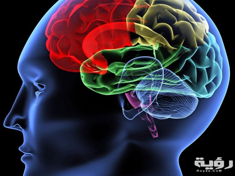 تفسير رؤية الدماغ في الحلم