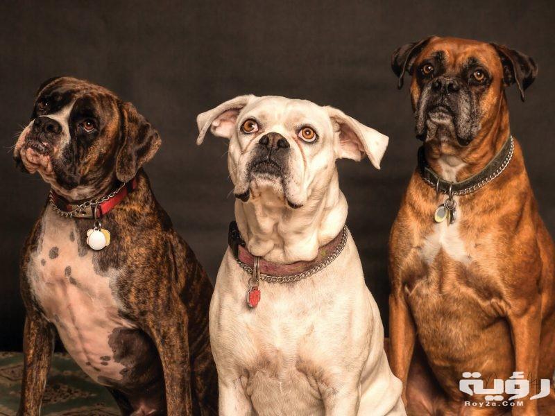 تفسير رؤية الهروب من الكلاب في المنام