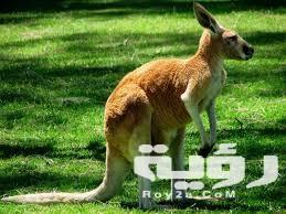 اسم حيوان بحرف ك الكاف من ست حروف