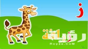 اسم حيوان بحرف ز الزين موقع رؤية