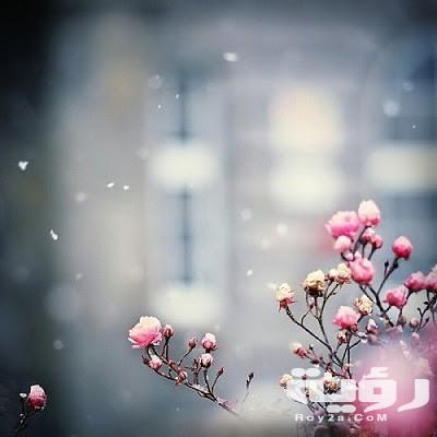 صور خلفيات هادئة وجميلة