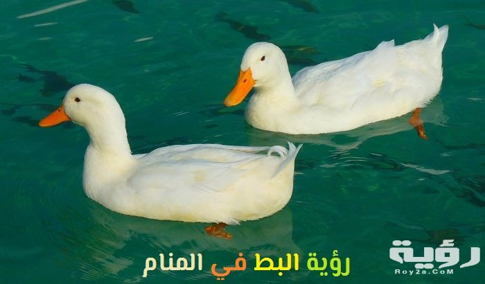 تفسير رؤية ذبح البط