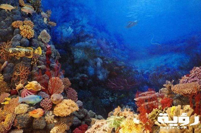 تفسير رؤية المرجان في الحلم